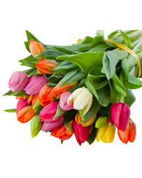 Mixed Color Tulips. Russia