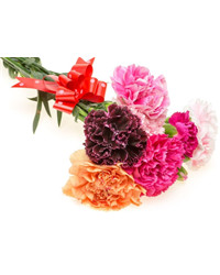 Mixed Color Carnations. Russia