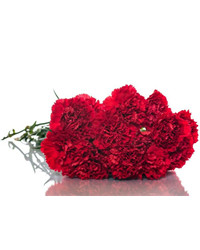 Red Carnations. Russia
